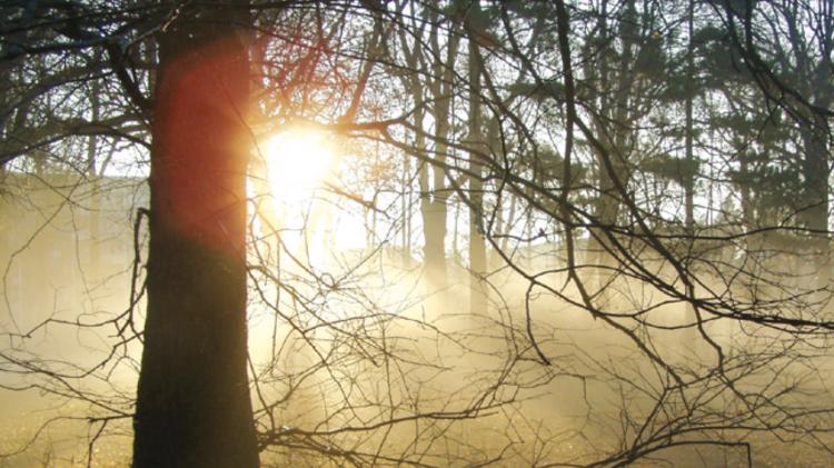 Waldspaziergang für Kinder und Erwachsene mit Michael Zobel